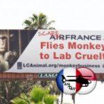 Air France: le transport de primates dénoncé à LA