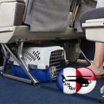 Chien mort dans le compartiment bagage : United Airlines s'excuse